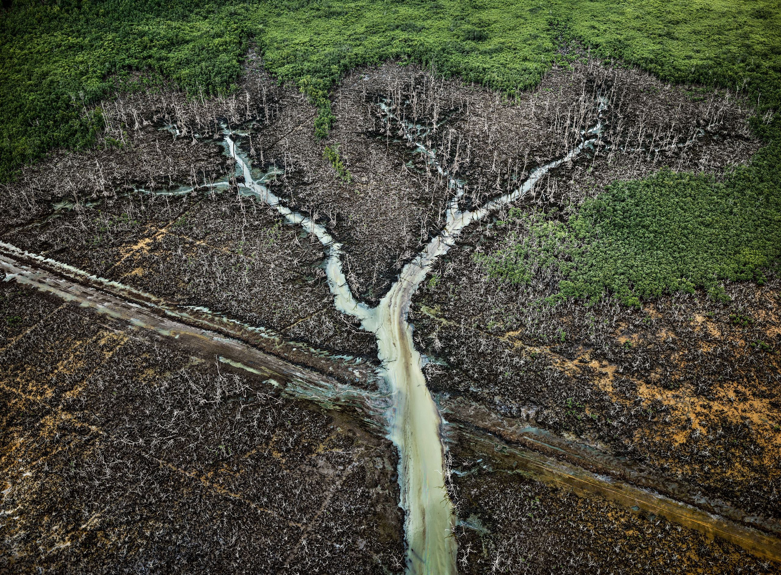 Covid-19 : Stratégies écologistes en temps de pandémie